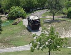 Bush Gardens Safari