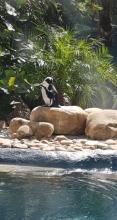 Bush Gardens Pinguine