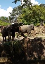 Bush Gardens Elefanten