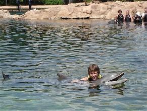 Discovery Cove Orlando- Delphinschwimmen