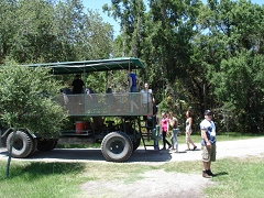 Trail Buggy Guided Wildlife Tour