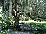 Kostenlos in Orlando - Harry Leu Gardens