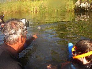 Schwimmen mit freilebenden Manatees
