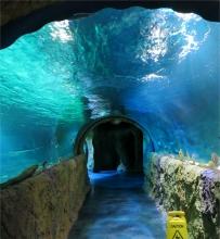 Sea Life Haitunnel
