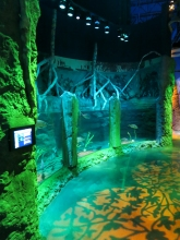 Sea Life  Orlando Exponat
