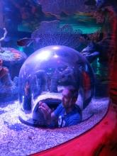 Sea Life  Photostop im Becken