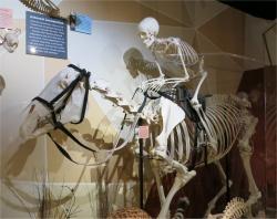 Skeletons Orlando Pferd mit Reiter