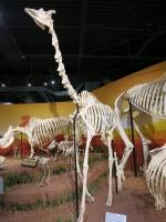 Skeletons Orlando Giraffen