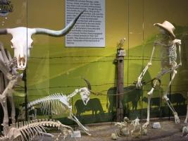 Skeletons OrlandoTiere