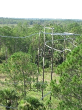 Ziplining in Florida